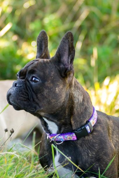 Psychedelic Dog Collar