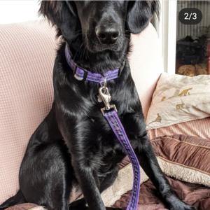 purple tartan dog collar and lead