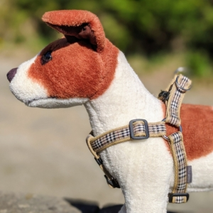 harness for your dog