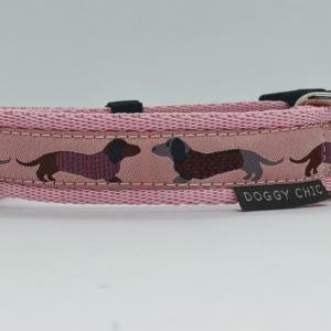 animal dachshund collar