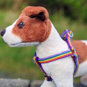 rainbow dog harness