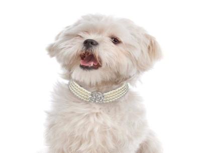 bling rhinestone dog collar