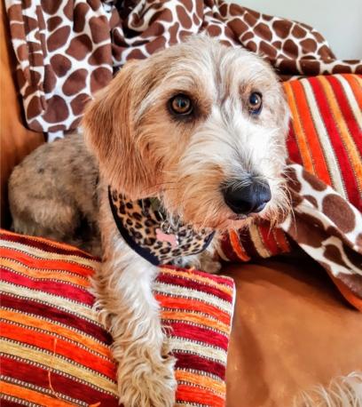 animal print harness