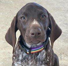 pride dog collar