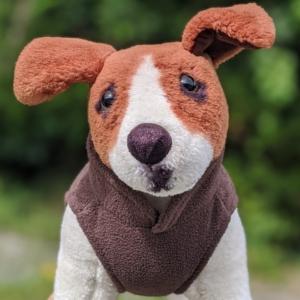 brown dog jumper