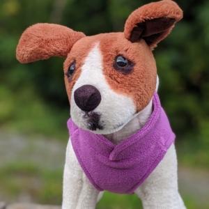 purple dog jumper