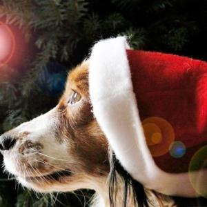 Santa Paws Christmas Shop 2021