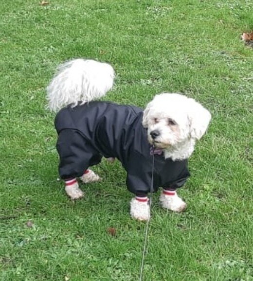 Bob in his trouser suit